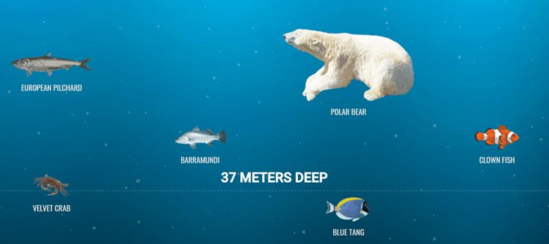 Polar bear - EUROPEAN PILCHARD POLAR BEAR CLOWN FISH BARRAMUNDI 37 METERS DEEP VELVET CRAB BLUE TANG