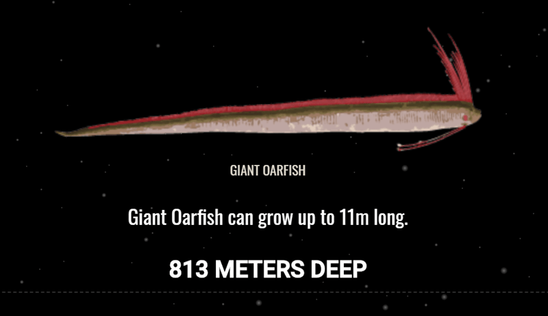 Fish - GIANT OARFISH Giant Oarfish can grow up to 11m long. 813 METERS DEEP