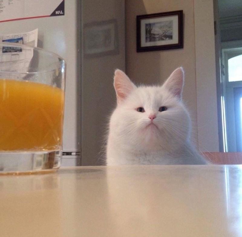 Cat - KAL