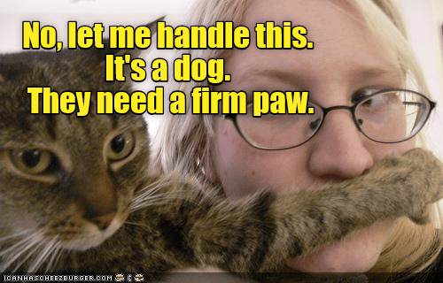 Cat - No, let me handle this. It's a dog. They need a firm paw. ICANHASCHEEZBURGER.COM