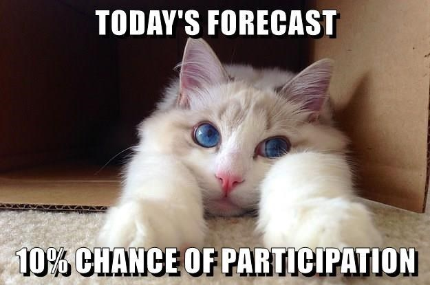 Cat - TODAY'S FORECAST 10% CHANCE OF PARTICIPATION