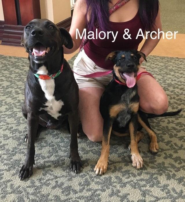 Dog - Malory & Archer
