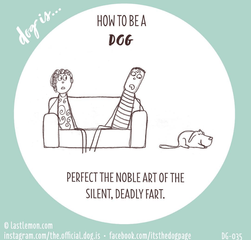 Font - HOW TO BE A dog is. DOG PERFECT THE NOBLE ART OF THE SILENT, DEADLY FART. © lastlemon.com instagram.com/the.official.dog.is · facebook.com/itsthedogpage DG-035