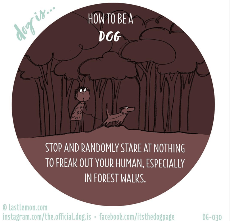 Text - HOW TO BE A dog is. DOG STOP AND RANDOMLY STARE AT NOTHING TO FREAK OUT YOUR HUMAN, ESPECIALLY IN FOREST WALKS. © Lastlemon.com instagram.com/the.official.dog.is · facebook.com/itsthedogpage DG-030