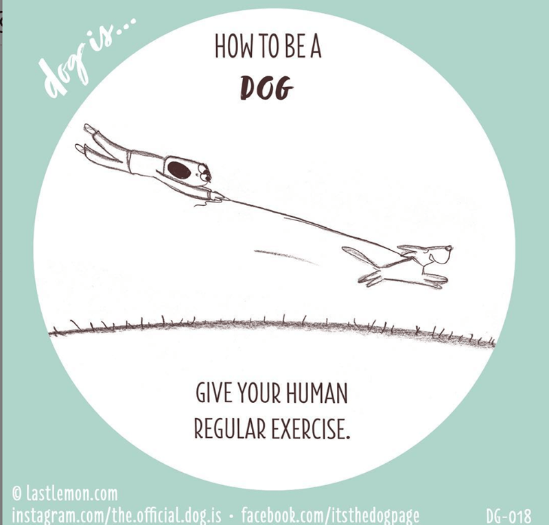 Line - HOW TO BE A dog is. DOG GIVE YOUR HUMAN REGULAR EXERCISE. @ lastlemon.com instagram.com/the.official.dog.is · facebook.com/itsthedogpage DG-018