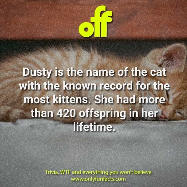 Text - off Dusty is the name of the cat with the known record for the most kittens. She had more than 420 offspring in her lifetime. Trivia, WTF and everything you won't believe www.onlyfunfacts.com