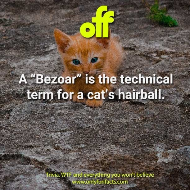 "Cat - off A ""Bezoar"" is the technical term for a cat's hairball. Trivia, WTF and everything you won't believe www.onlyfunfacts.com"