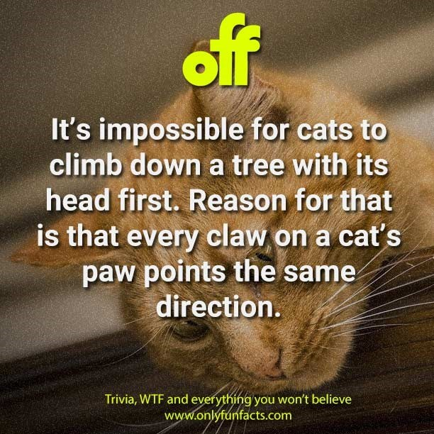 Text - ff It's impossible for cats to climb down a tree with its head first. Reason for that is that every claw on a cat's paw points the same direction. Trivia, WTF and everything you won't believe www.onlyfunfacts.com