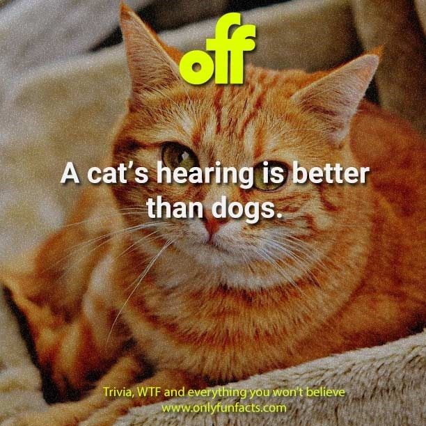 Cat - of A cat's hearing is better than dogs. Trivia, WTF and everything you won't believe www.onlyfunfacts.com