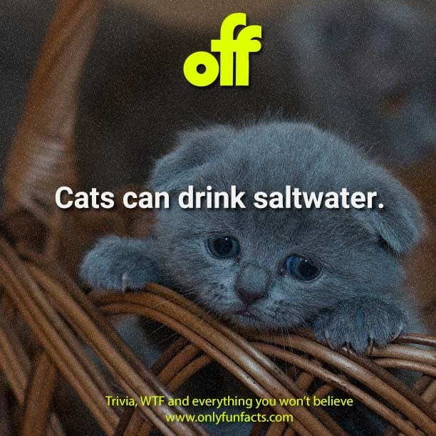 Cat - off Cats can drink saltwater. Trivia, WTF and everything you won't believe www.onlyfunfacts.com