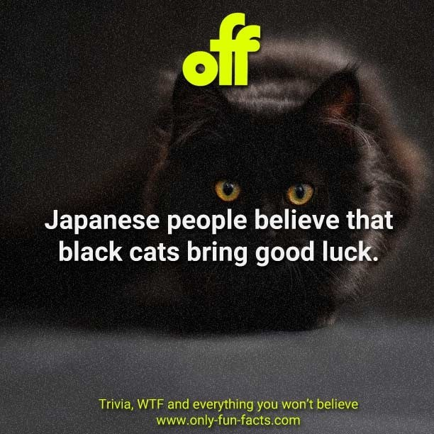 Cat - off Japanese people believe that black cats bring good luck. Trivia, WTF and everything you won't believe www.only-fun-facts.com