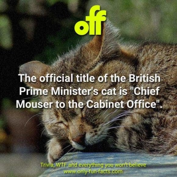 "Cat - off The official title of the British Prime Minister's cat is ""Chief Mouser to the Cabinet Office"". Trivia, WTF and everything you won't believe www.only fun-facts.com"