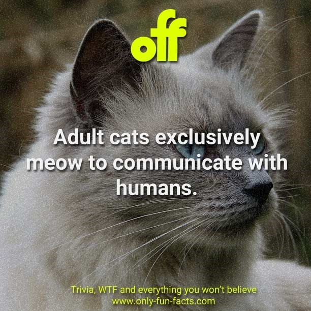 Cat - of Adult cats exclusively meow to communicate with humans. Trivia, WTF and everything you won't believe www.only-fun-facts.com