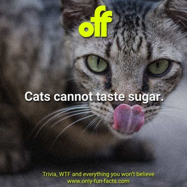 Cat - of Cats cannot taste sugar. Trivia, WTF and everything you won't believe www.only-fun-facts.com