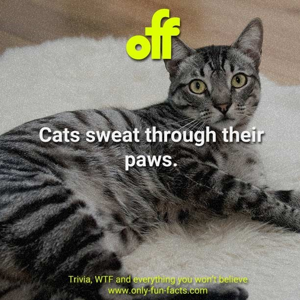 Cat - of Cats sweat through their paws. Trivia, WTF and everything you won't believe www.only-fun-facts.com