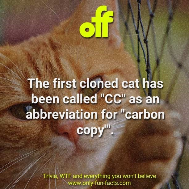 "Cat - off The first cloned cat has been called ""CC"" as an abbreviation for ""carbon copy"". Trivia, WTF and everything you won't believe www.only-fun-facts.com"