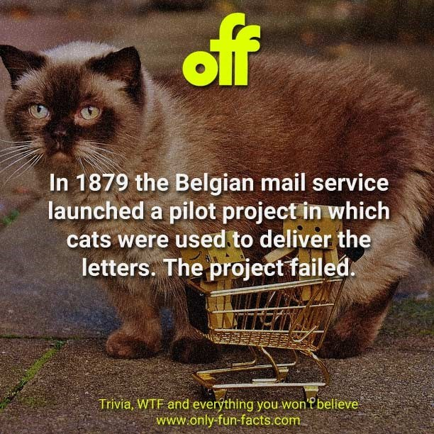 Cat - of In 1879 the Belgian mail service launched a pilot project in which cats were used to deliver the letters. The project failed. Trivia, WTF and everýthing you won'f bellieve www.only-fun-facts.com
