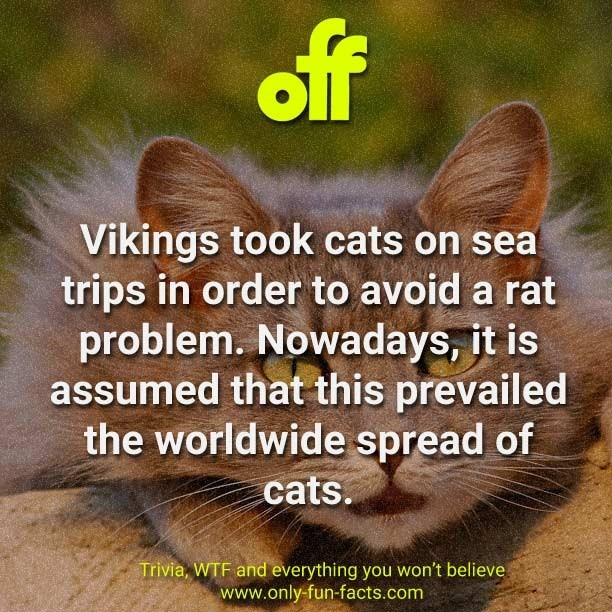 Text - off Vikings took cats on sea trips in order to avoid a rat problem. Nowadays, it is assumed that this prevailed the worldwide spread of cats. Trivia, WTF and everything you won't believe www.only-fun-facts.com