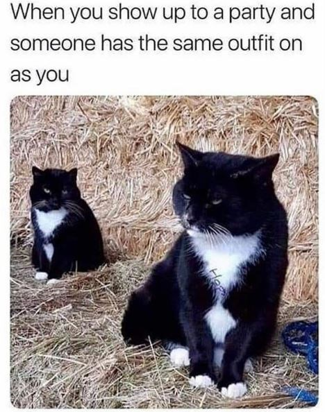 Cat - When you show up to a party and someone has the same outfit on as you