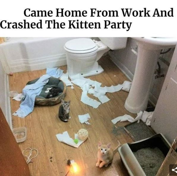 Floor - Came Home From Work And Crashed The Kitten Party