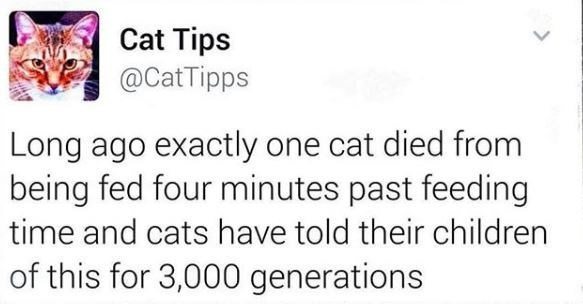 Text - Cat Tips @CatTipps Long ago exactly one cat died from being fed four minutes past feeding time and cats have told their children of this for 3,000 generations