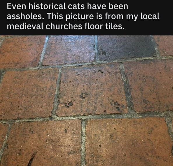 Floor - Even historical cats have been assholes. This picture is from my local medieval churches floor tiles.