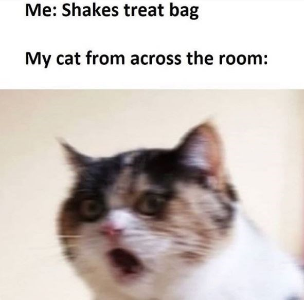 Cat - Me: Shakes treat bag My cat from across the room: