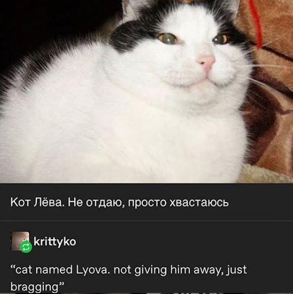 "Cat - Кот Лёва. Не отдаю, просто хвастаюсь krittyko ""cat named Lyova. not giving him away, just bragging"""
