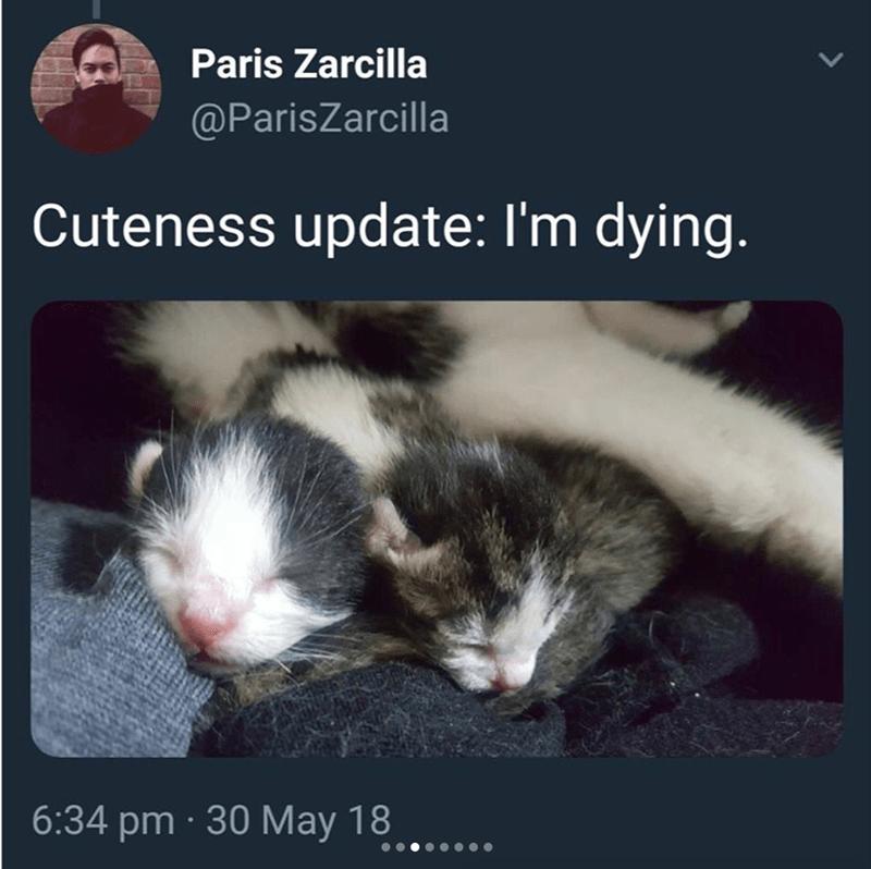 Cat - Paris Zarcilla @ParisZarcilla Cuteness update: I'm dying. 6:34 pm · 30 May 18