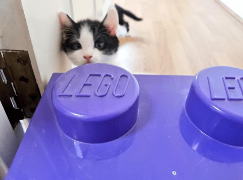 Text - Cat - LEGO LE