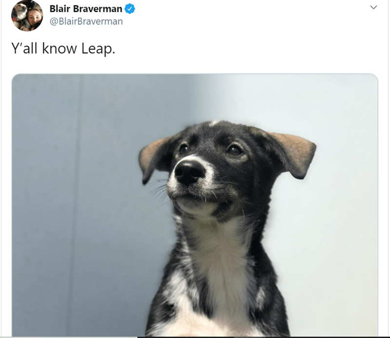 Dog - Blair Braverman @BlairBraverman Y'all know Leap.