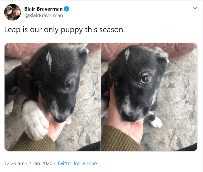 Dog breed - Blair Braverman @BlairBraverman Leap is our only puppy this season. 12:26 am · 2 Jan 2020 · Twitter for iPhone