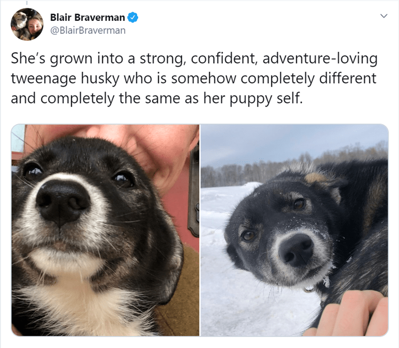 Dog breed - Blair Braverman @BlairBraverman She's grown into a strong, confident, adventure-loving tweenage husky who is somehow completely different and completely the same as her puppy self.
