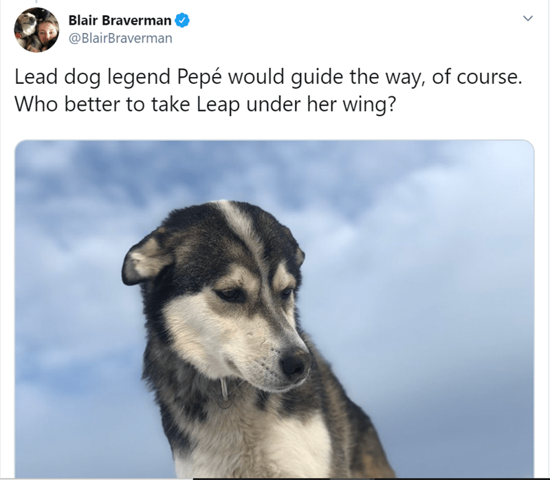 Mammal - Blair Braverman @BlairBraverman Lead dog legend Pepé would guide the way, of course. Who better to take Leap under her wing?