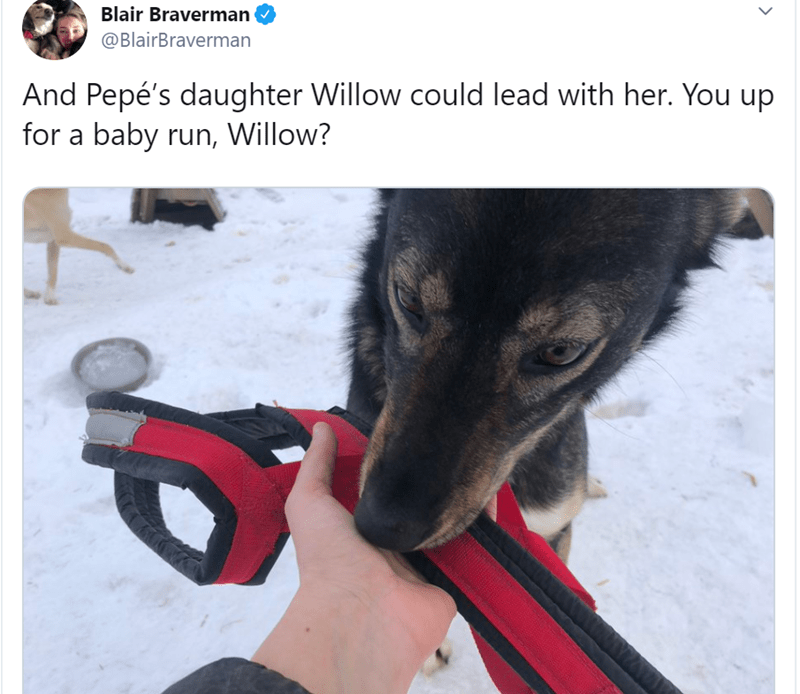 Dog - Blair Braverman @BlairBraverman And Pepé's daughter Willow could lead with her. You up for a baby run, Willow?