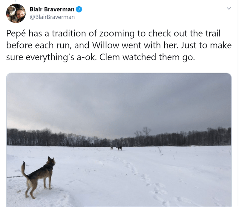 Canidae - Blair Braverman @BlairBraverman Pepé has a tradition of zooming to check out the trail before each run, and Willow went with her. Just to make sure everything's a-ok. Clem watched them go.