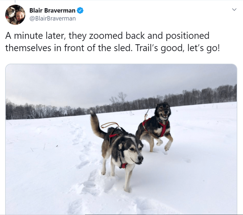 Vertebrate - Blair Braverman @BlairBraverman A minute later, they zoomed back and positioned themselves in front of the sled. Trail's good, let's go!