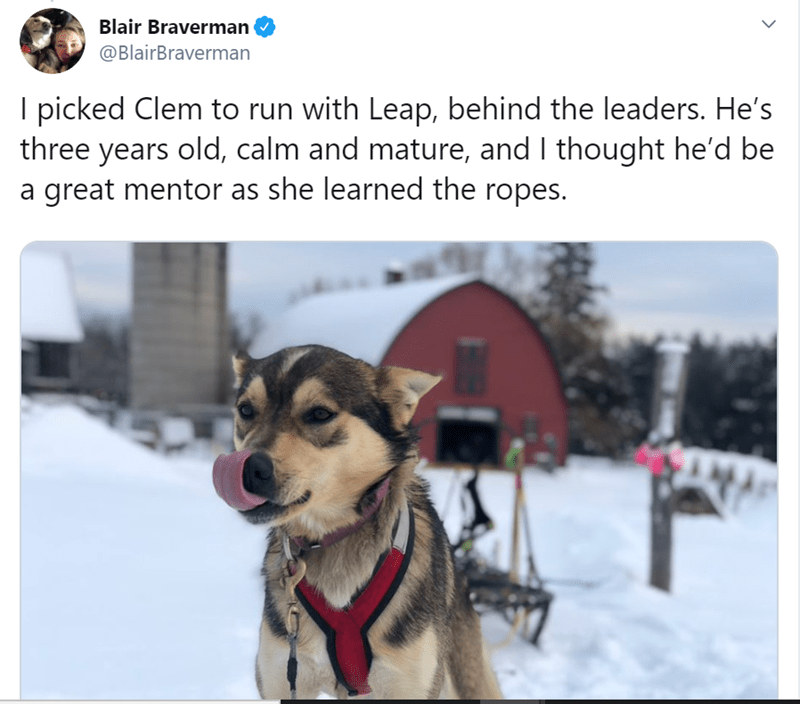 Mammal - Blair Braverman @BlairBraverman I picked Clem to run with Leap, behind the leaders. He's three years old, calm and mature, and I thought he'd be a great mentor as she learned the ropes.