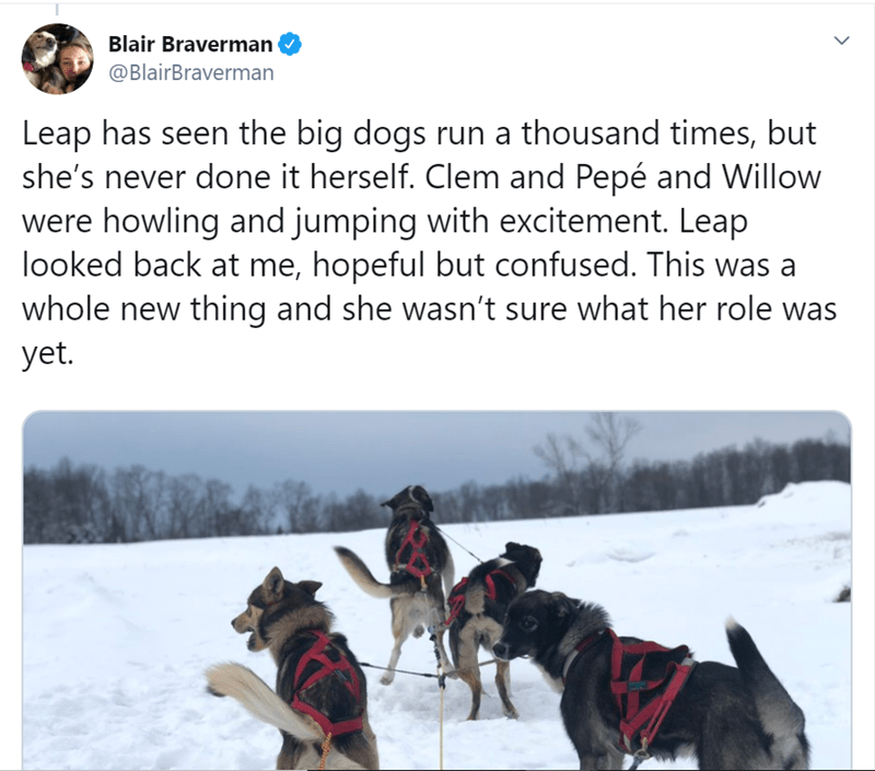 Mushing - Blair Braverman @BlairBraverman Leap has seen the big dogs run a thousand times, but she's never done it herself. Clem and Pepé and Willow were howling and jumping with excitement. Leap looked back at me, hopeful but confused. This was a whole new thing and she wasn't sure what her role was yet.