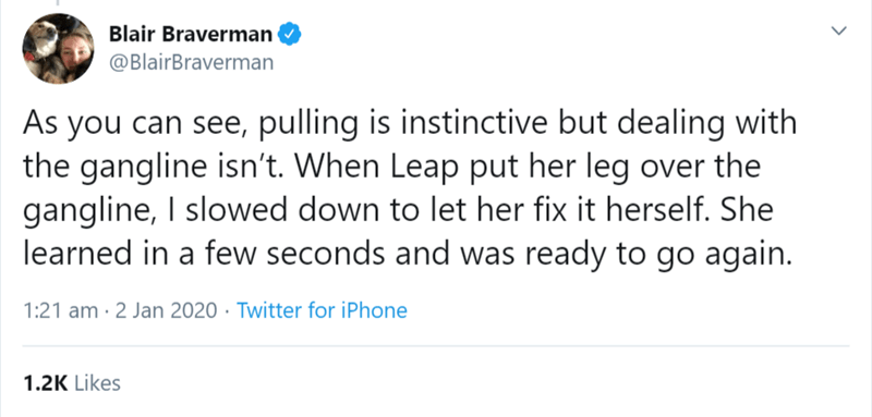 Text - Blair Braverman @BlairBraverman As you can see, pulling is instinctive but dealing with the gangline isn't. When Leap put her leg over the gangline, I slowed down to let her fix it herself. She learned in a few seconds and was ready to go again. 1:21 am · 2 Jan 2020 · Twitter for iPhone 1.2K Likes <>