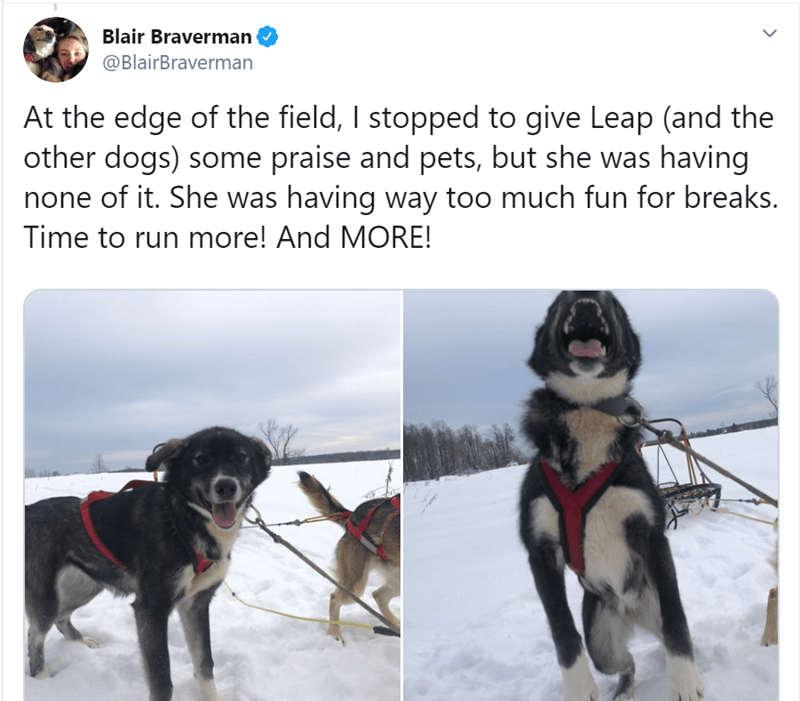 Dog - Blair Braverman @BlairBraverman At the edge of the field, I stopped to give Leap (and the other dogs) some praise and pets, but she was having none of it. She was having way too much fun for breaks. Time to run more! And MORE!