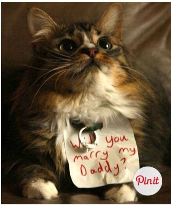 Cat - you marry my D addy? Pinit