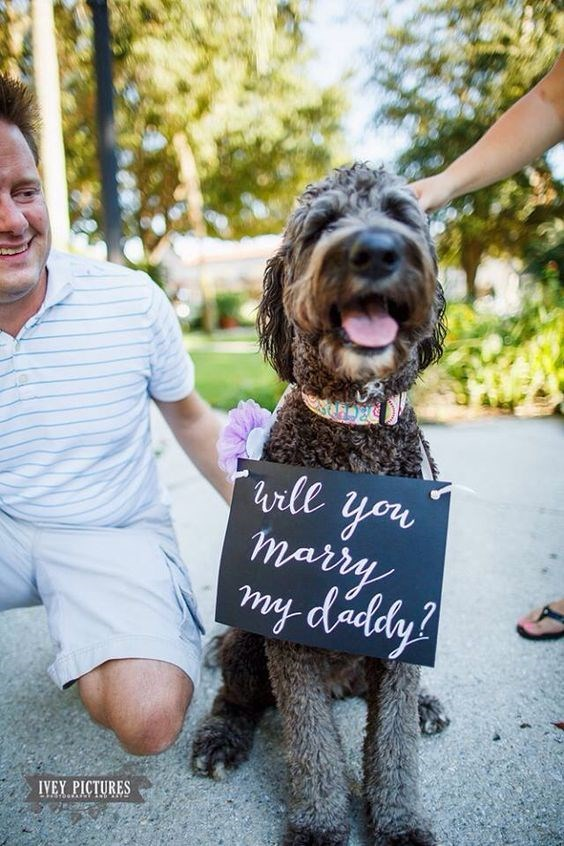 Dog - will you marry my daddy? IVEY PICTURES