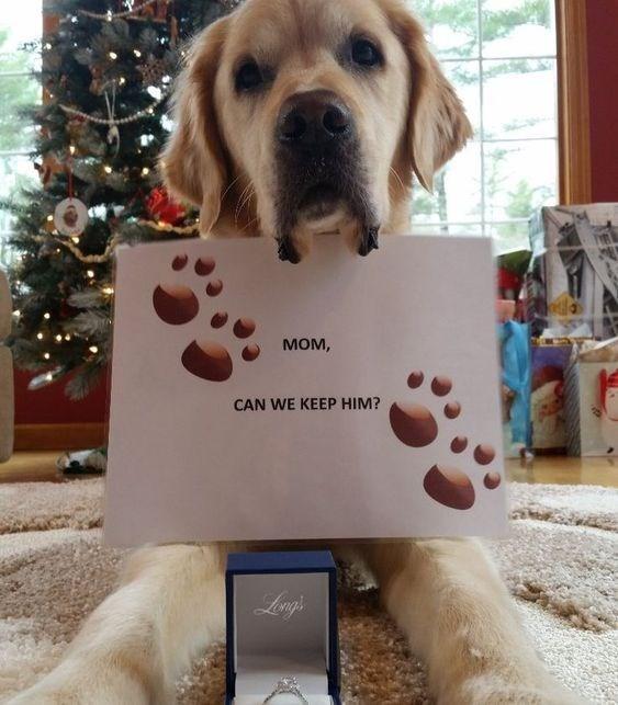 Dog breed - мом, CAN WE KEEP HIM? Lengs