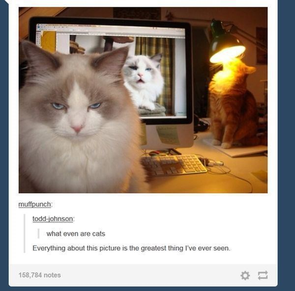 Cat - muffpunch: todd-johnson: what even are cats Everything about this picture is the greatest thing I've ever seen. 158,784 notes
