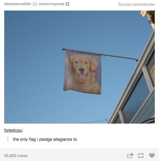 Screenshot - eleanawcalder unicornxpoop Source: caramelmew forestcpu: the only flag i pledge allegiance to 65,922 notes