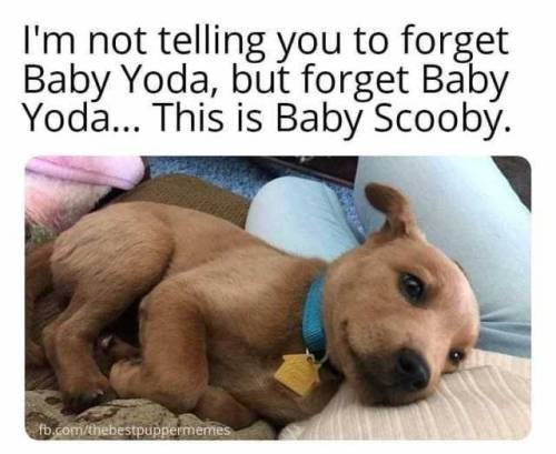 i'm not telling you to forget baby yoda, but forget baby yoda... this is baby scooby