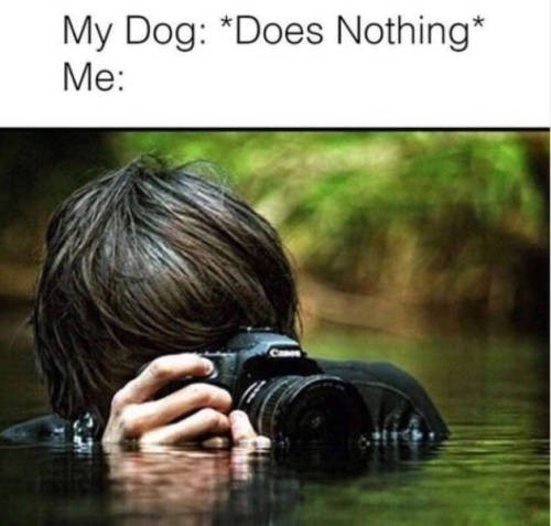my dog: does nothing. me: photographer standing in neck height water