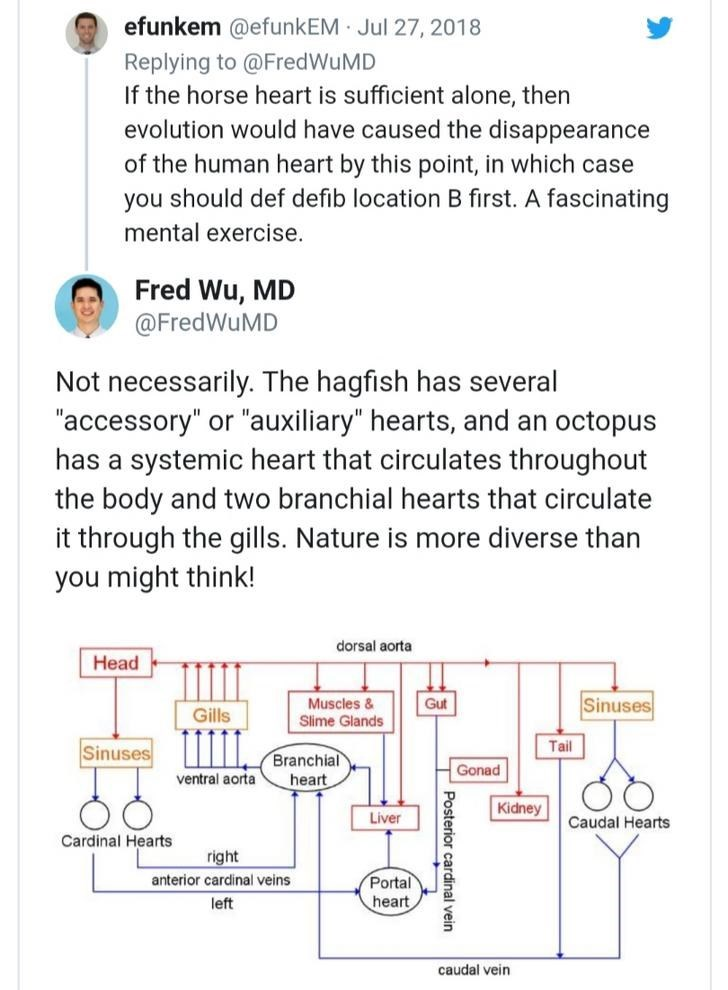 """Text - efunkem @efunkEM Jul 27, 2018 Replying to @FredWuMD If the horse heart is sufficient alone, then evolution would have caused the disappearance of the human heart by this point, in which case you should def defib location B first. A fascinating mental exercise. Fred Wu, MD @FredWuMD Not necessarily. The hagfish has several """"accessory"""" or """"auxiliary"""" hearts, and an octopus has a syst mic heart that circulates throughout the body and two branchial hearts that circulate it through the gills."""