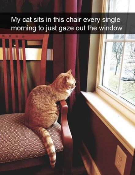 Cat - My cat sits in this chair every single morning to just gaze out the window